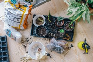 Wskazówki, które sprawią, że będziesz entuzjastycznie nastawiony do ogrodnictwa