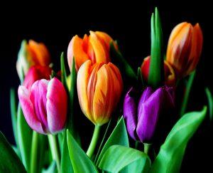 Co zrobić aby kwiaty cięte dłużej wytrzymały?